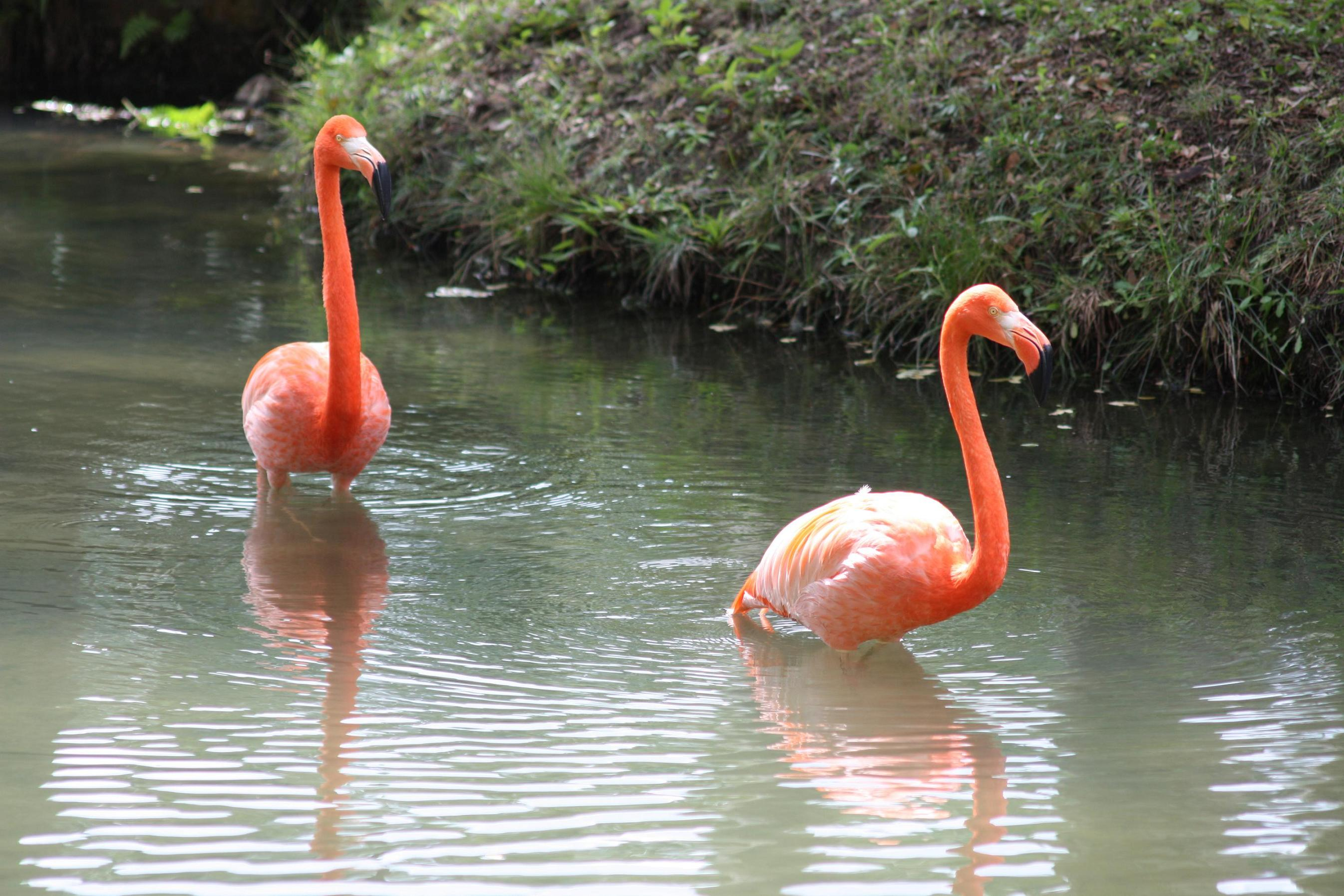Grues,Flamants,Ibis